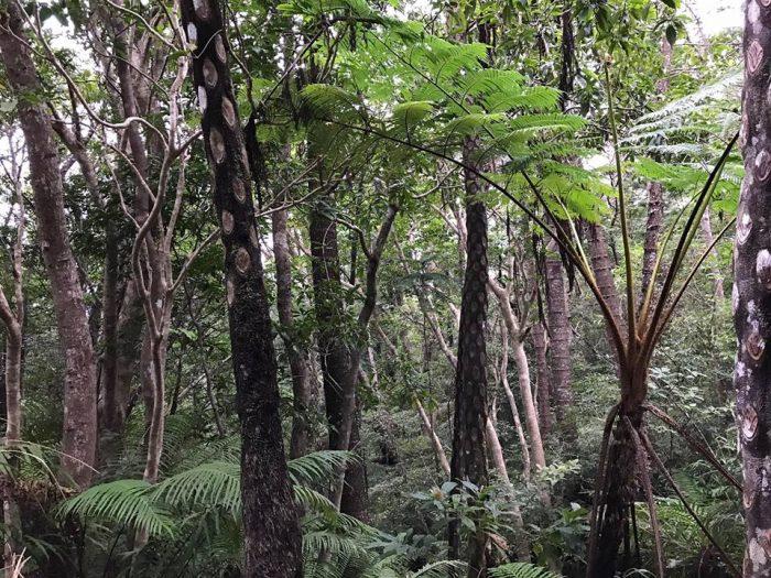 もう熱帯雨林のムード満載!