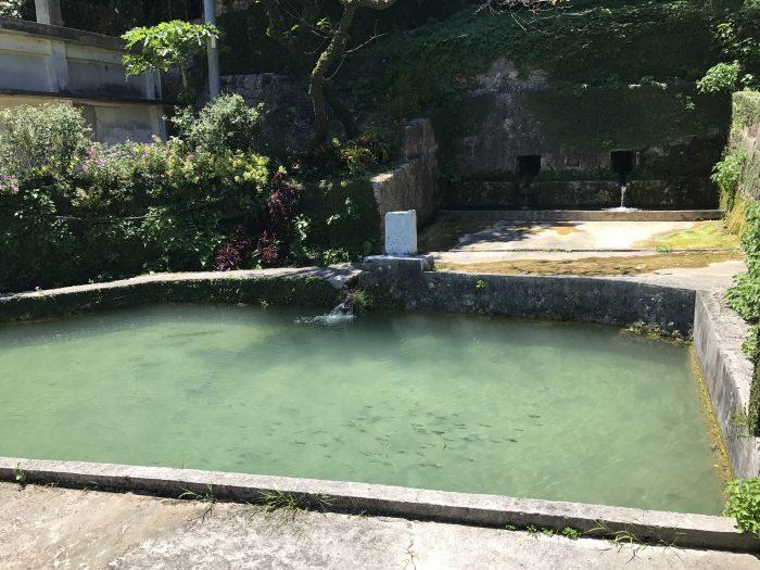 水量も溜めてるプールのサイズもスゴい!ヤンガー