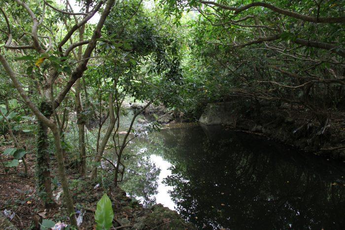 公園内の川、結構デカいし深い
